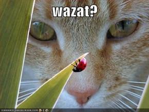 wazat?