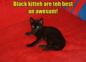 Black kitteh are teh best  an awesum!
