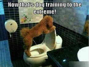Now that's dog training to the extreme!
