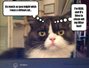As much as you might wish I was a virtual cat...
