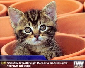 Breaking News - Scientific breakthrough! Monsanto produces grow your own cat seeds!