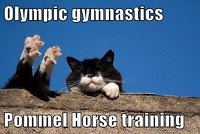 Olympic gymnastics  Pommel Horse training