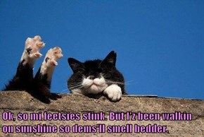 Ok, so mi feetsies stink. But I'z been walkin on sunshine so dems'll smell bedder.