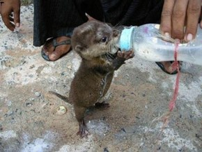 Tiny Otter hands