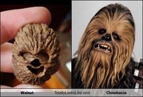 This Walnut Totally Looks Like Chewbacca