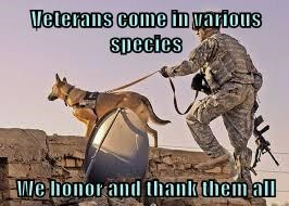 Veterans come in various species  We honor and thank them all