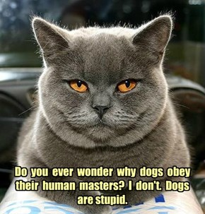 Do  you  ever  wonder  why  dogs  obey their  human  masters?  I  don't.  Dogs  are stupid.
