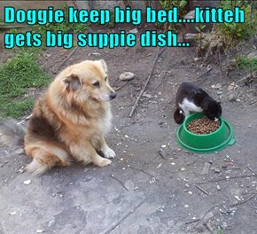 Doggie keep big bed....kitteh gets big suppie dish...