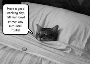 I wish I was my kitteh