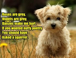 Roses are grey, Violets are grey, Daisies make me hurl. If you wanted nutty poetry You should have  Asked a squirrel.