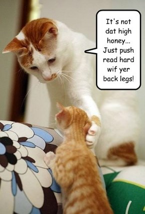 It's not dat high honey... Just push read hard wif yer back legs!