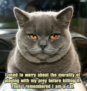I  used  to  worry  about  the  morality  of playing  with  my  prey  before  killing  it.  Then  I  remembered  I  am  a  cat.