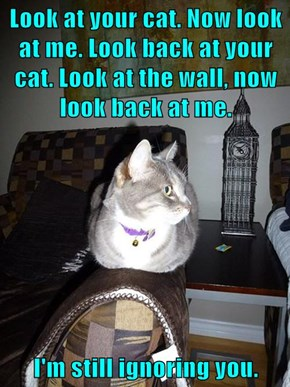 Look at your cat. Now look at me. Look back at your cat. Look at the wall, now look back at me.  I'm still ignoring you.