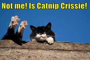 Not me! Is Catnip Crissie!