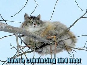 Nawt a convincing bird nest