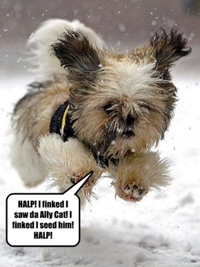 He can slither through the snow like a snow snake. Beware u widdle Yorkie!