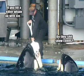 If you fill a killer whale up with ice. . .