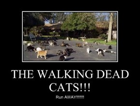 THE WALKING DEAD CATS!!!