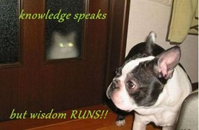 knowledge speaks    but wisdom RUNS!!
