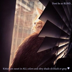 Dont be so BLIND..  Kitties are sweet in ALL colors and ebry shade ob black or gray ♥