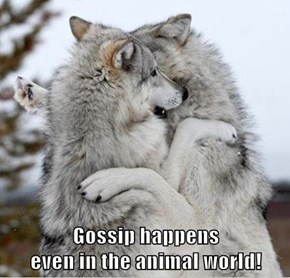 Gossip happens                                                      even in the animal world!