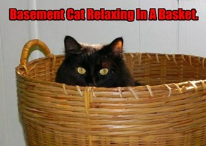 Basement Cat Relaxing In A Basket.