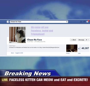 Breaking News - FACELESS KITTEH CAN MEOW and EAT and EXCRETE!
