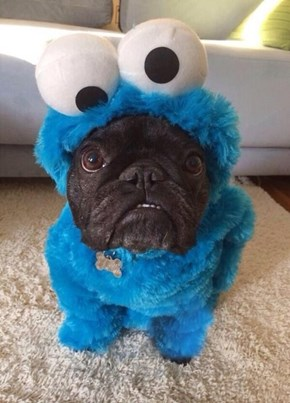 Give This Little Monster All the Cookies