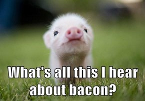 What's all this I hear about bacon?