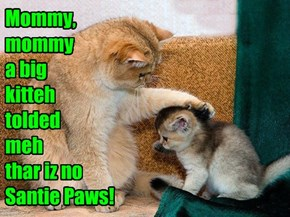 Mommy, mommy  a big kitteh tolded   meh  thar iz no Santie Paws!