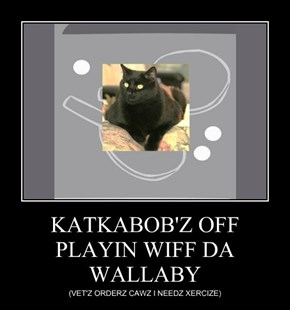 KATKABOB'Z OFF PLAYIN WIFF DA WALLABY