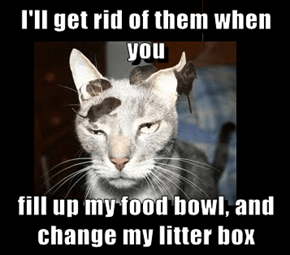 I'll get rid of them when you   fill up my food bowl, and change my litter box