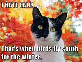 I HATE FALL!  That's when birds fly south for the winter.