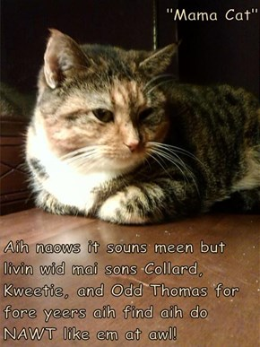 """""""Mama Cat""""  Aih naows it souns meen but livin wid mai sons Collard, Kweetie, and Odd Thomas for fore yeers aih find aih do NAWT like em at awl!"""