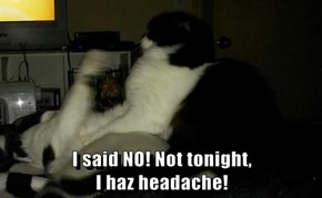 I said NO! Not tonight,                                                    I haz headache!