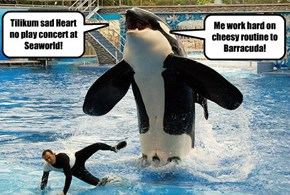 Tilikum sad Heart no play concert at Seaworld!
