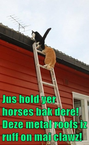 Jus hold yer horses bak dere! Deze metal roofs iz ruff on mai clawz!