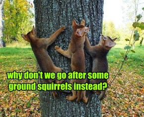 why don't we go after some ground squirrels instead?
