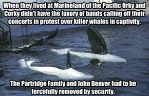 When they lived at Marineland of the Pacific Orky and Corky didn't have the luxory of bands calling off their concerts in protest over killer whales in captivity.