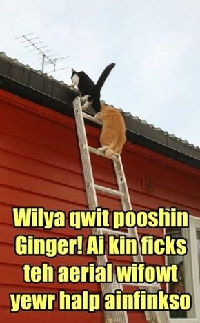 Wilya qwit pooshin Ginger! Ai kin ficks teh aerial wifowt yewr halp ainfinkso