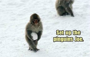 Set  up  the pinguins  Joe.