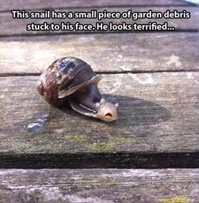 This Snail is Shell Shocked
