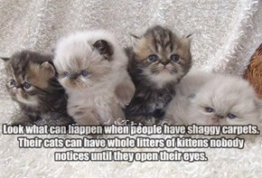 Look what can happen when people have shaggy carpets. Their cats can have whole litters of kittens nobody notices until they open their eyes.