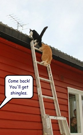 Come back!  You'll get shingles.