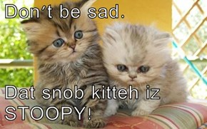 Don't be sad.  Dat snob kitteh iz STOOPY!