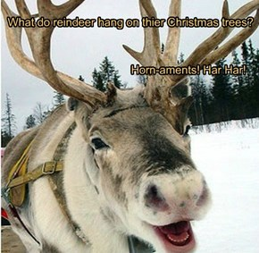 What do reindeer hang on thier Christmas trees?