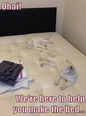Ohai!  We're here to help you make the bed...
