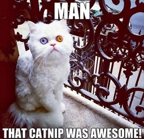Color Me Catnip!