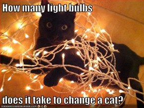 How many light bulbs  does it take to change a cat?