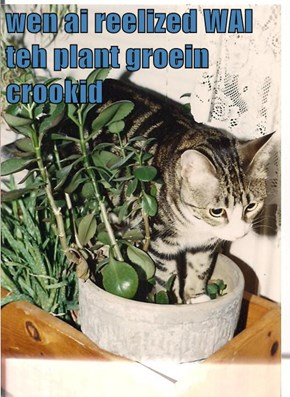 wen ai reelized WAI teh plant groein crookid